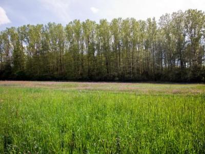 Prairie humide